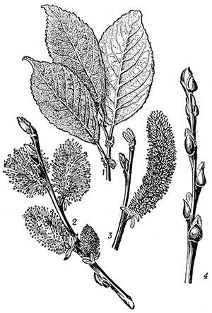 Сезонные изменения растений